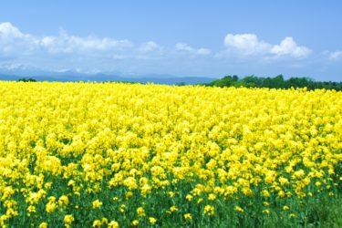 【北海道庁】日本の国土の約22%を占める「北海道」の地方公共団体