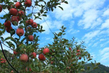 【青森県庁】津軽海峡、リンゴといえば東北地方の「青森」の地方公共団体