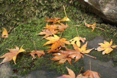 【江戸の3大改革】「寛政の改革」は「老中主導」による改革