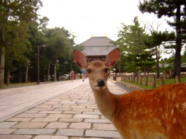 【奈良県庁】全国1位の国宝・重要文化財を持つ「奈良県」の地方公共団体