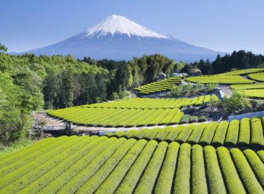日本の食卓と米作りが変わる?政府の減反政策撤廃とその背景について