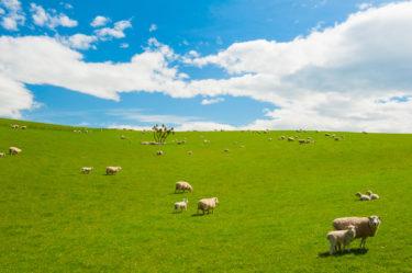農林水産省所管の独立行政法人「家畜改良センター」に就職するには?