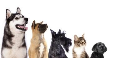 犬のおまわりさん? 事件・事故・災害現場で活躍する警察犬・災害救助犬