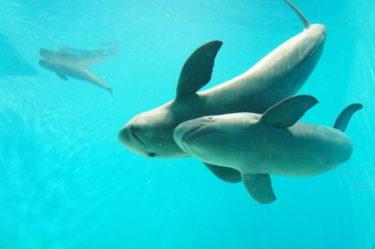 「海水魚の販売を取り扱う卸売業」に関する仕事内容・給料レポート