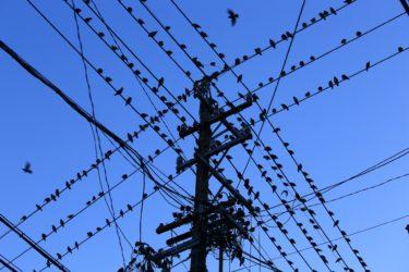 【鳥獣被害 約164億円!?】兵庫県Iotによる最先端の対策に注目