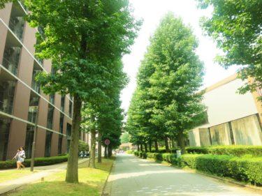 千葉県の某大学で働く大学教員の仕事内容・給料レポート