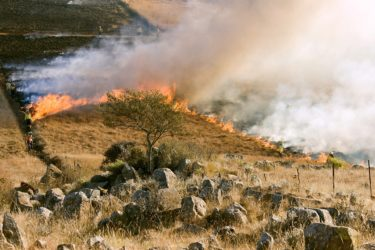 実は大惨事になっているアメリカの山火事について
